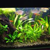 Подготовка аквариума к заполнению водой
