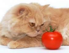 Чем можно кормить кошку