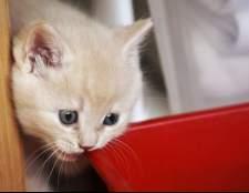 Имена кошек: как можно назвать британскую кошку