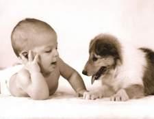 Как нарисовать ребенку собаку