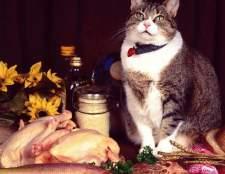 Можно ли кормить домашнюю кошку сырым мясом