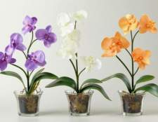 Можно ли поливать орхидею водой из-под крана