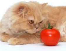 Правила кормления кошек
